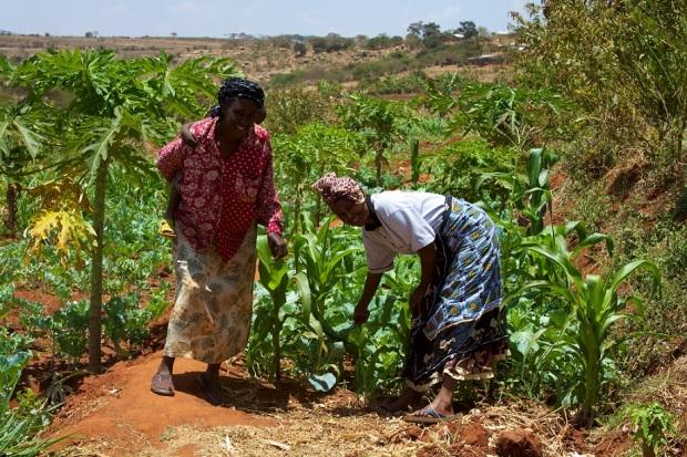rwandan smallholder farmers