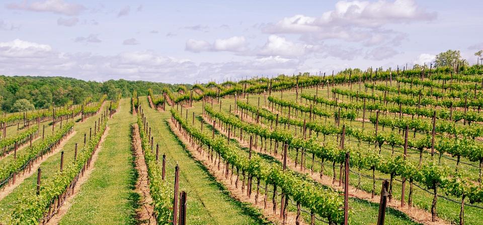 californian winery